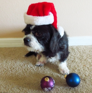 Sparky Wearing a Santa Hat with Ornaments