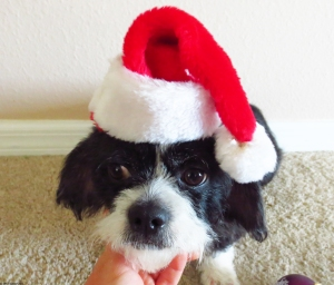 Sparky Wearing a Santa Hat
